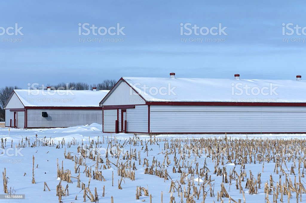 Hog Barns on Winter Day stock photo