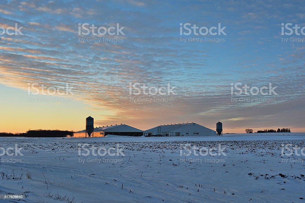 Hog Barns stock photo