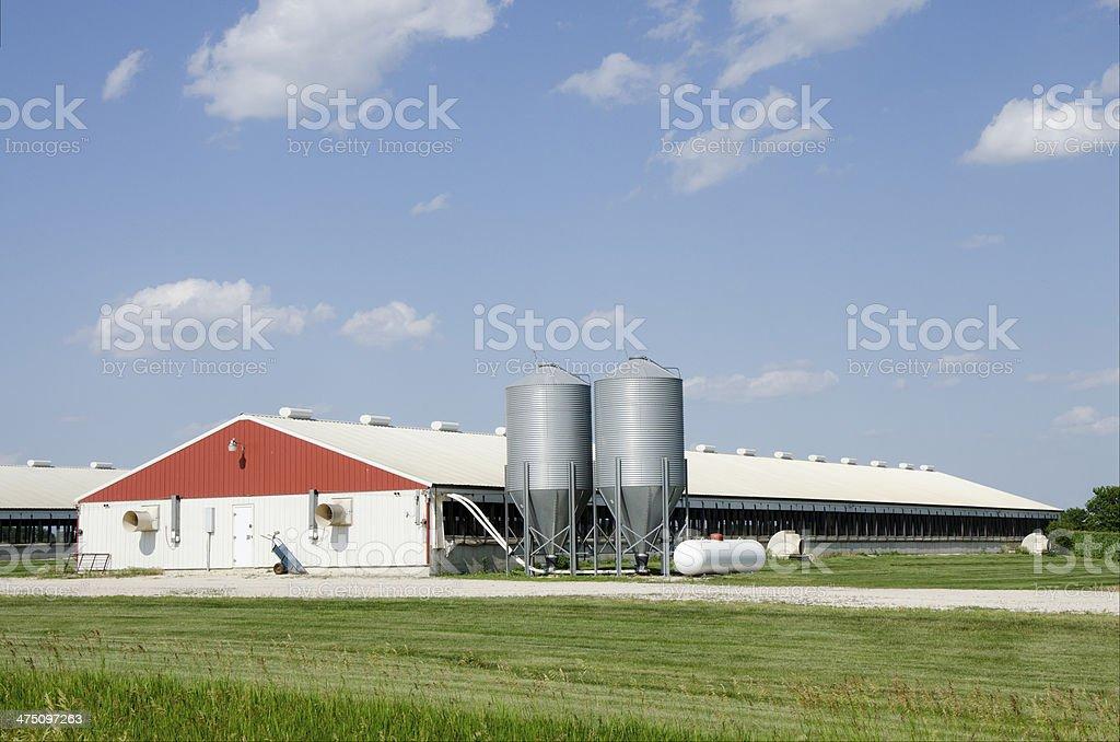hog containment facility stock photo