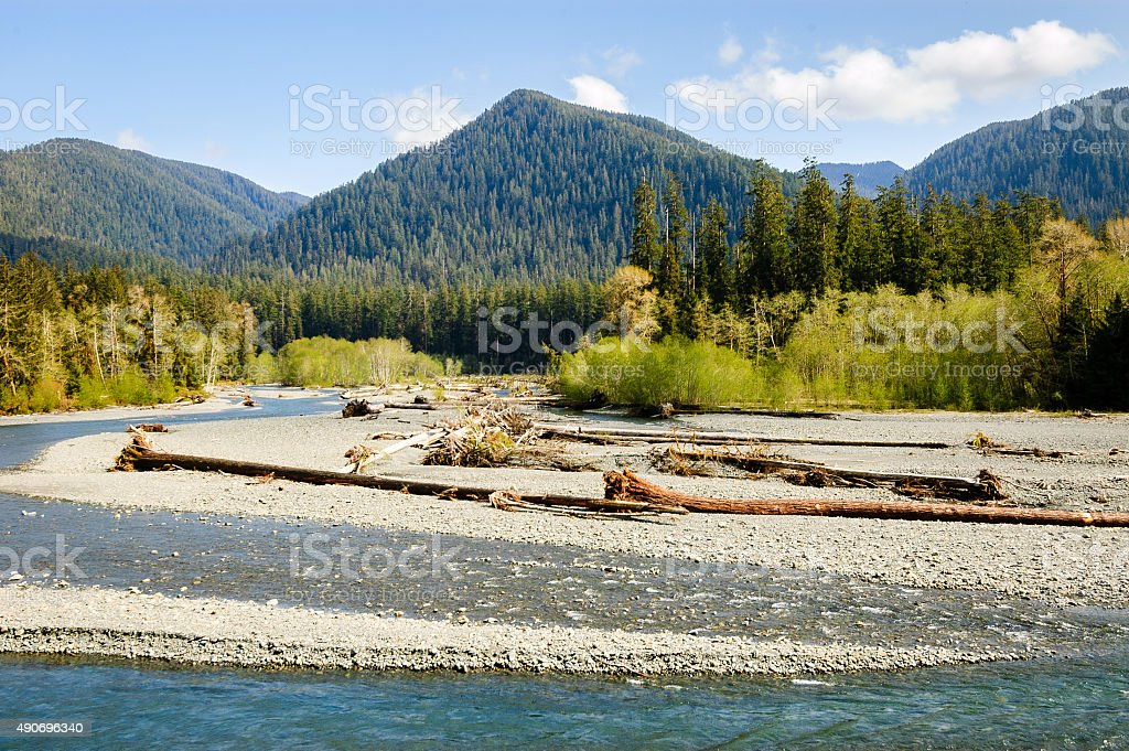 Hoh Rain Forest, Olympic National Park stock photo