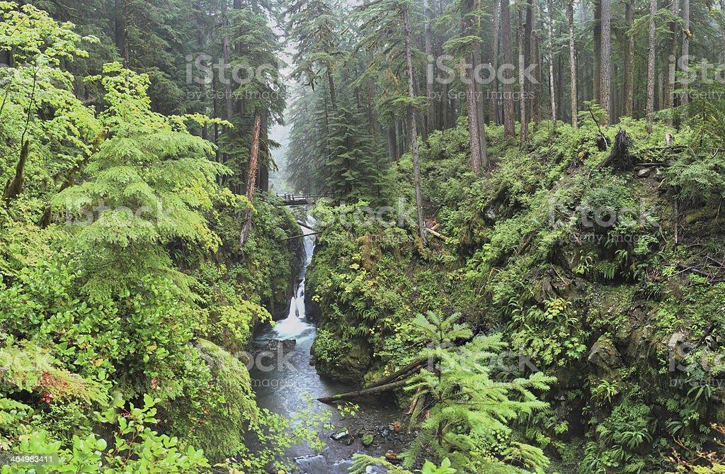 Hoh Rain Forest stock photo