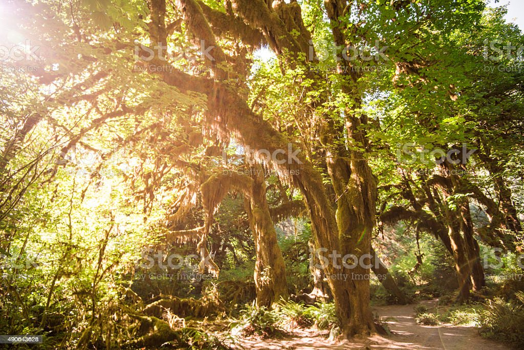 Hoh Rainforest in the washington state stock photo