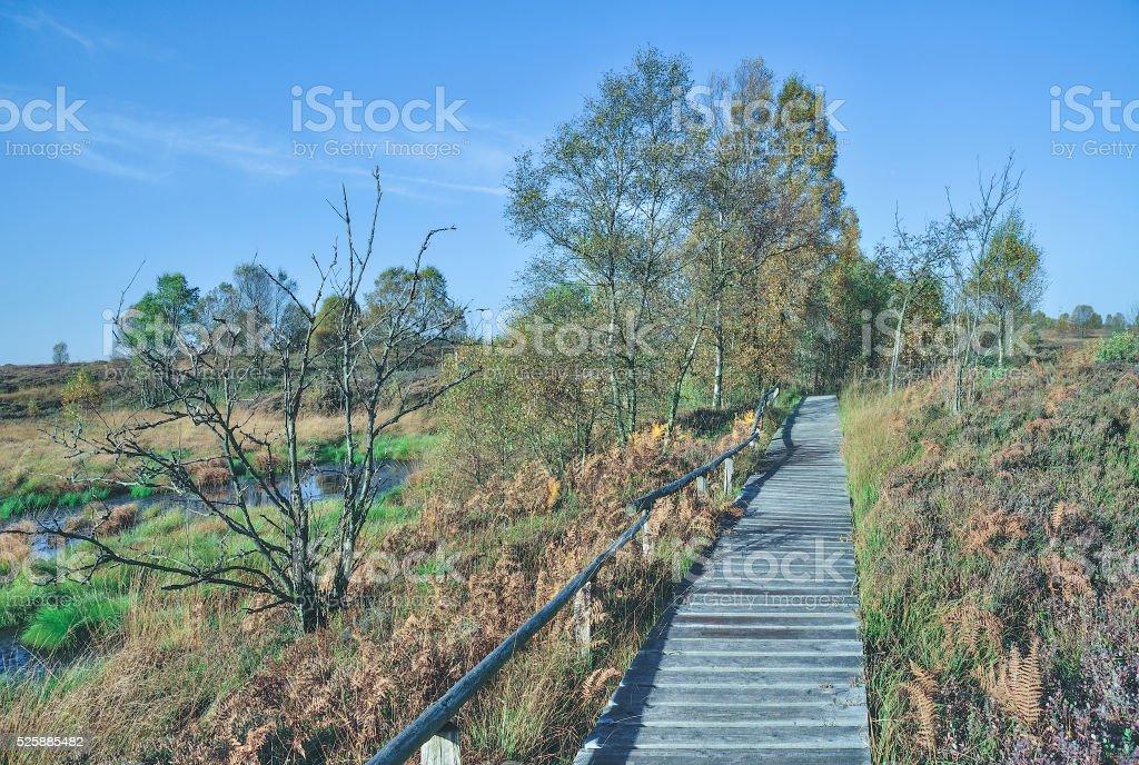 Hohes Venn,Eifel National Park,Germany stock photo