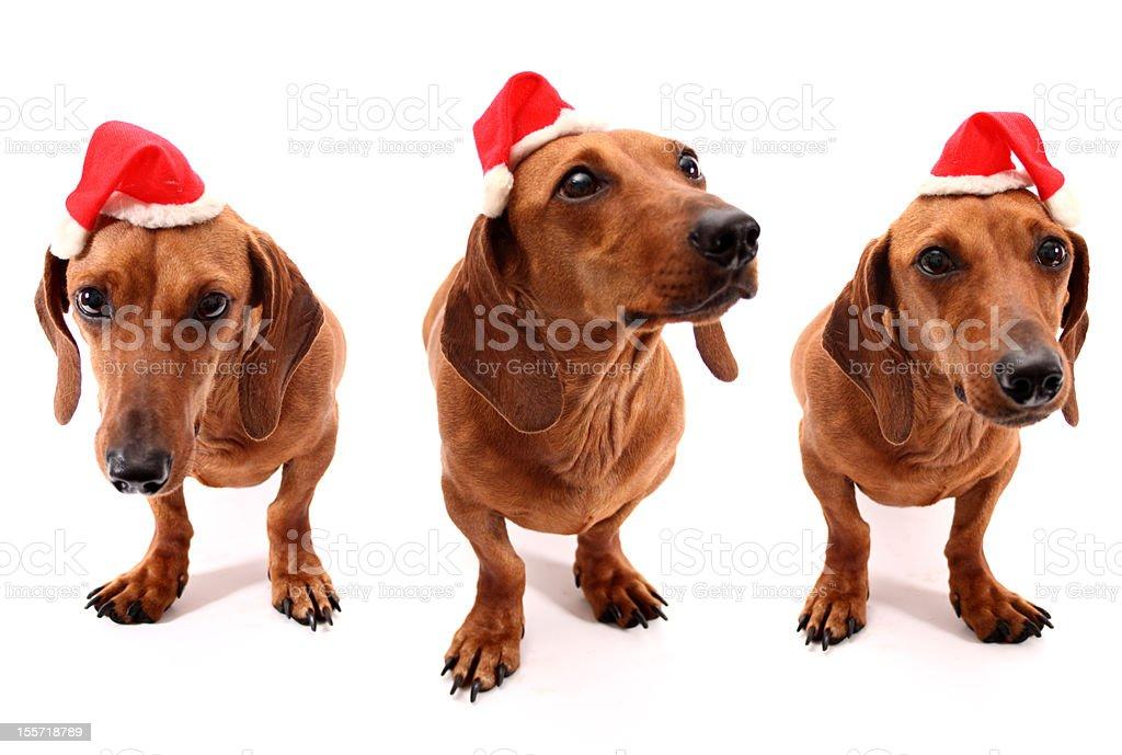 Hohoho dogs royalty-free stock photo