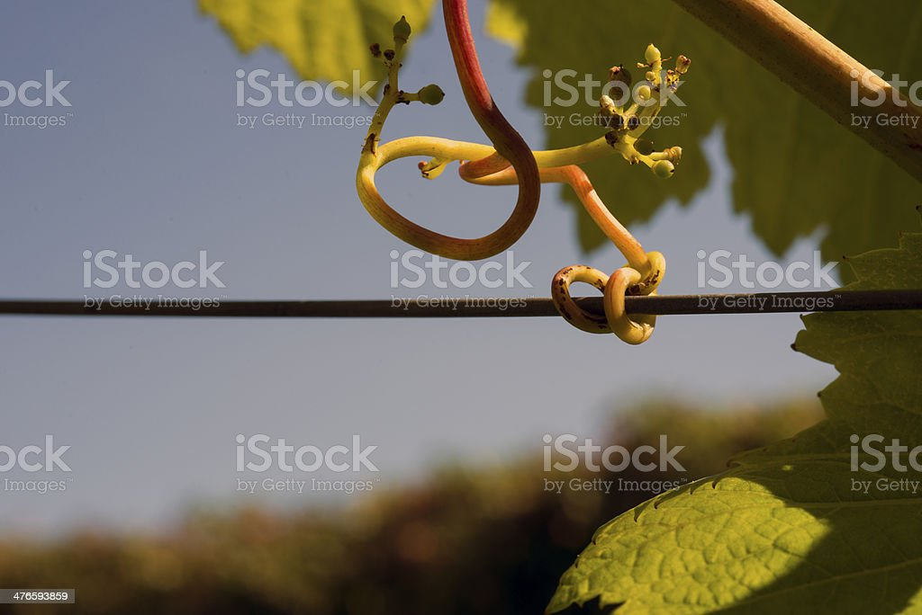 Hold on the wire royalty-free stock photo