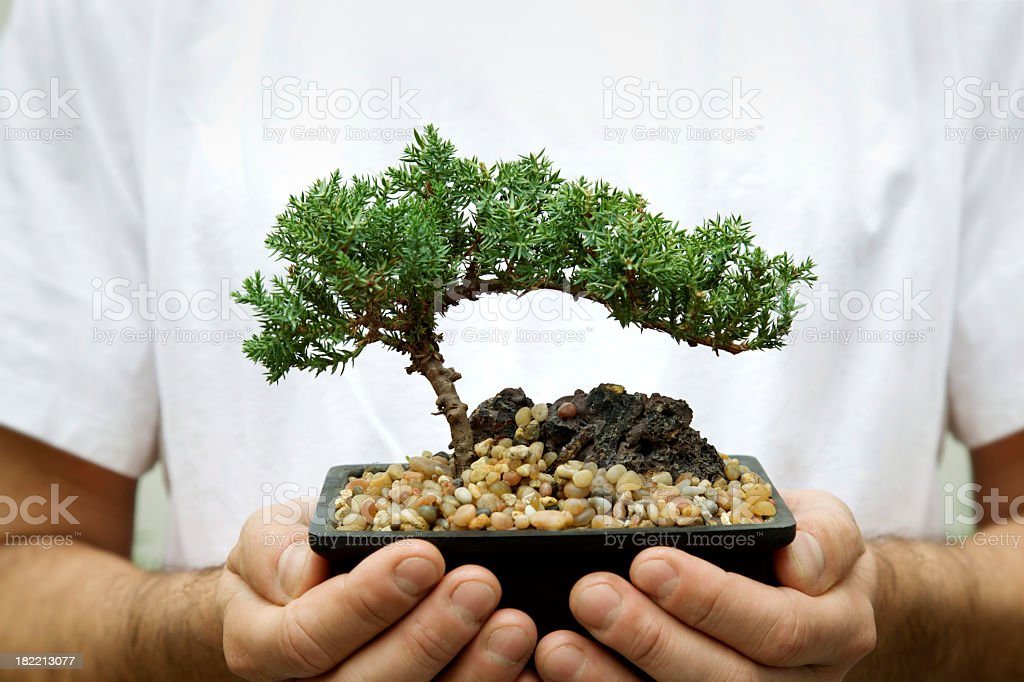 Holding a bonsai tree. stock photo
