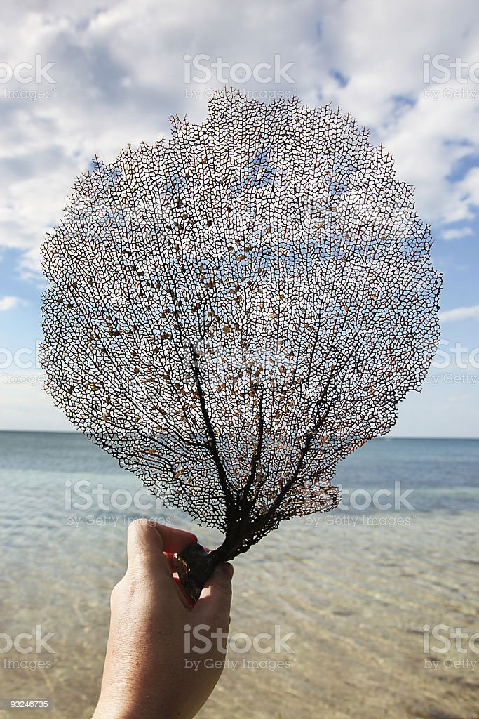 Holding a branch of stranded coral stock photo