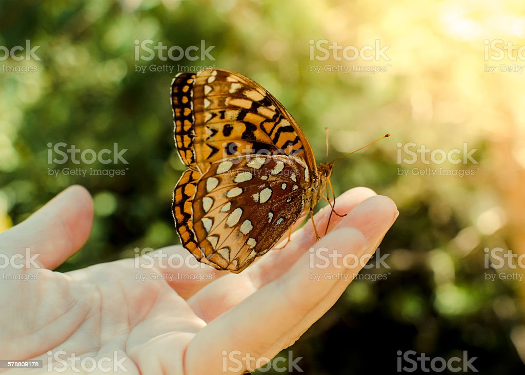 Holding a Butterfly stock photo