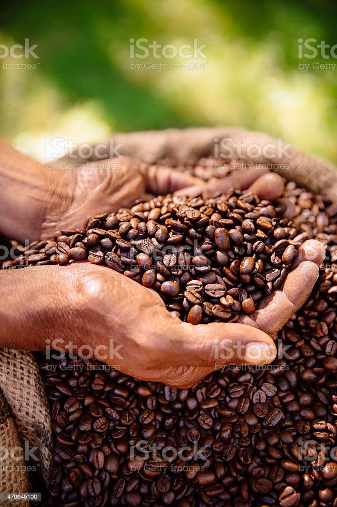 Holding a crop of aromatic coffee beans, roasted stock photo