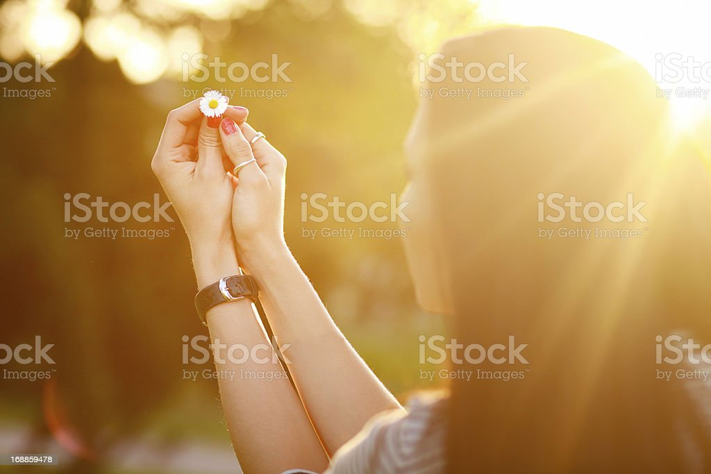 Holding a daisy flower in sunlight royalty-free stock photo