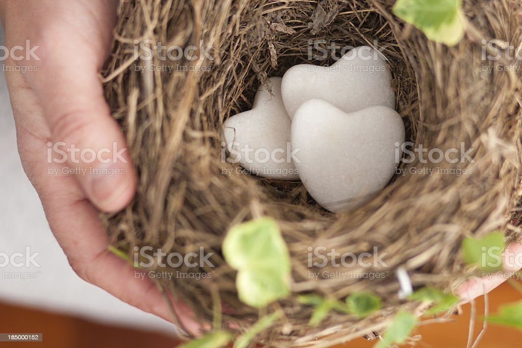 Holding a nest of love stock photo