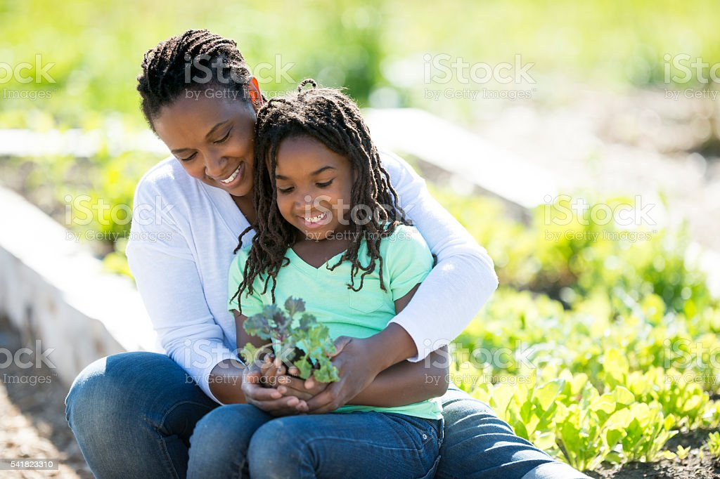 Holding a Plant for the Garden stock photo