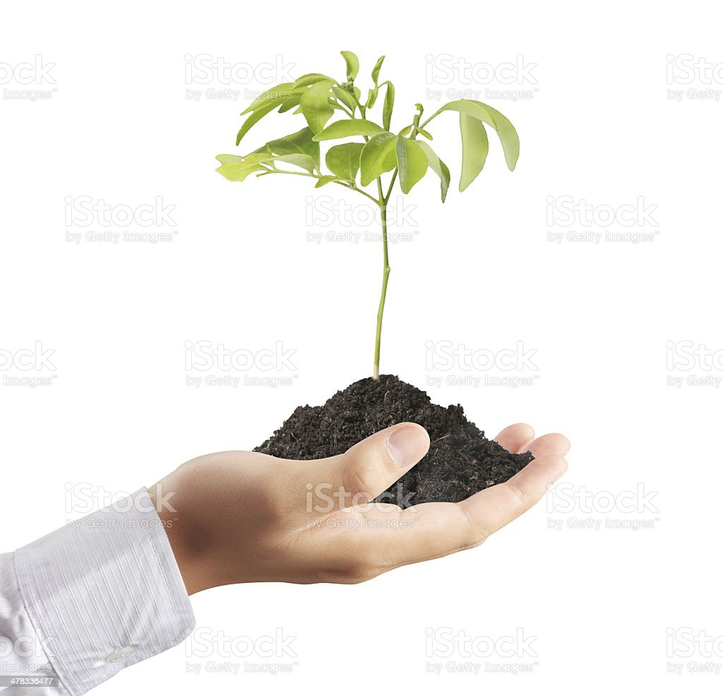 holding a plant stock photo