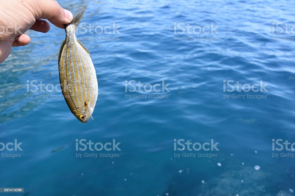 Holding a small fish stock photo