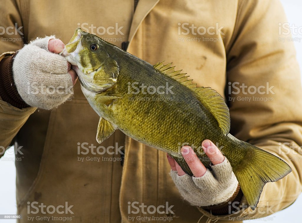 Holding a Smallmouth Bass royalty-free stock photo