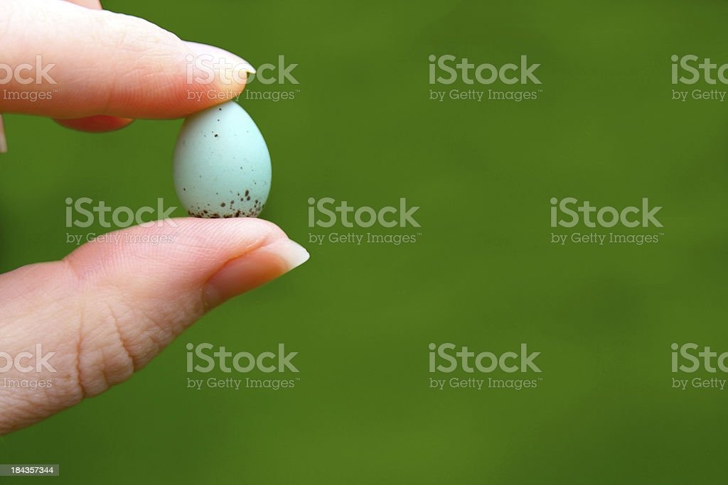 Holding a Tiny Blue Robin Bird Egg with Copyspace stock photo