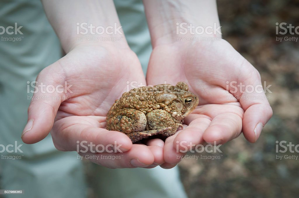 Holding a toad stock photo