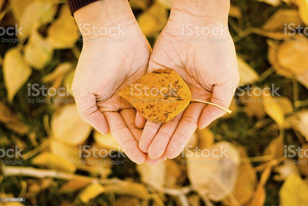 Holding Autumn stock photo