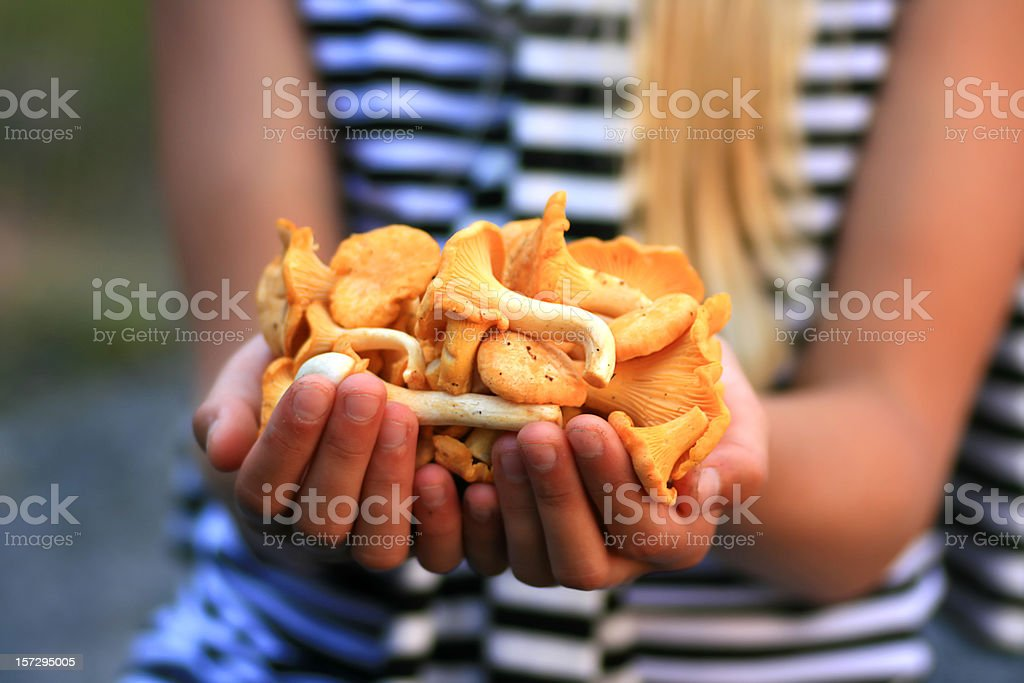 Holding Chanterelles stock photo