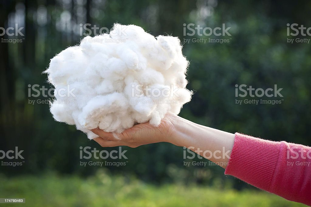 Holding cotton stock photo