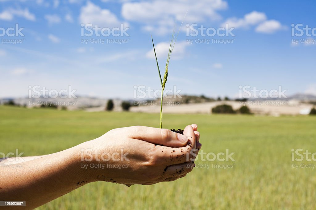 holding crop in hands royalty-free stock photo