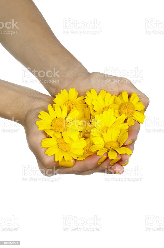 Holding daisies royalty-free stock photo