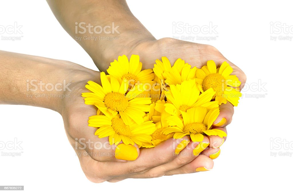 Holding daisies stock photo