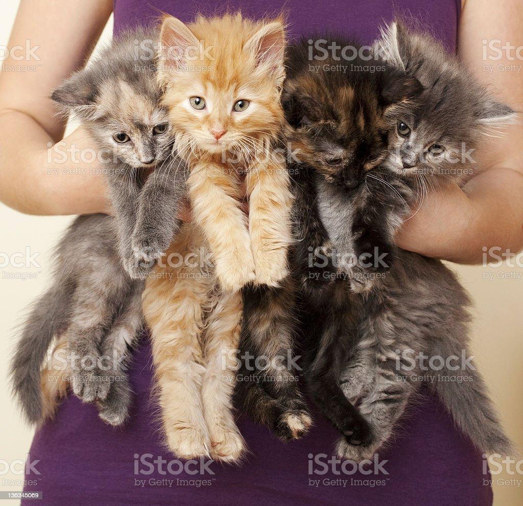 Holding Four Kittens stock photo