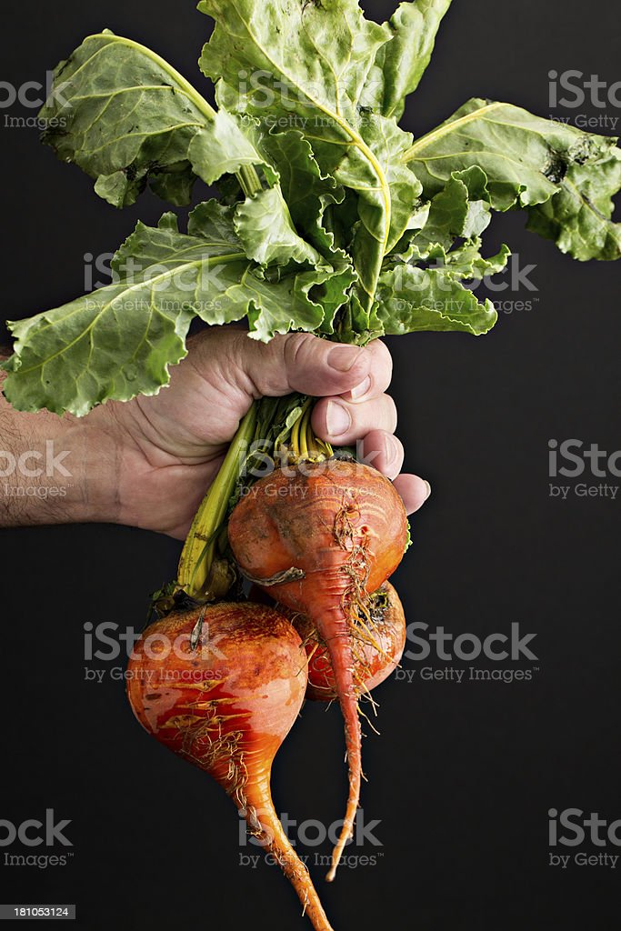 Holding Fresh Beets stock photo