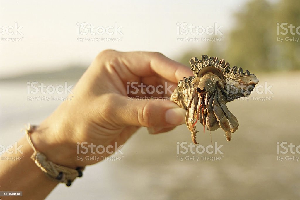 holding hermit crab royalty-free stock photo