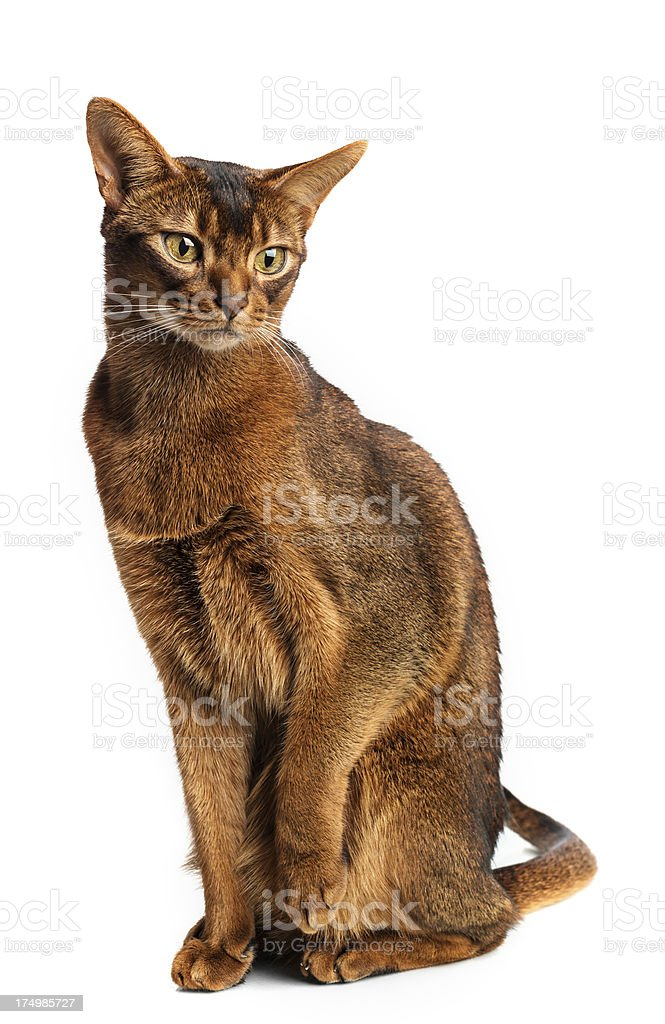 Holding His Paw stock photo