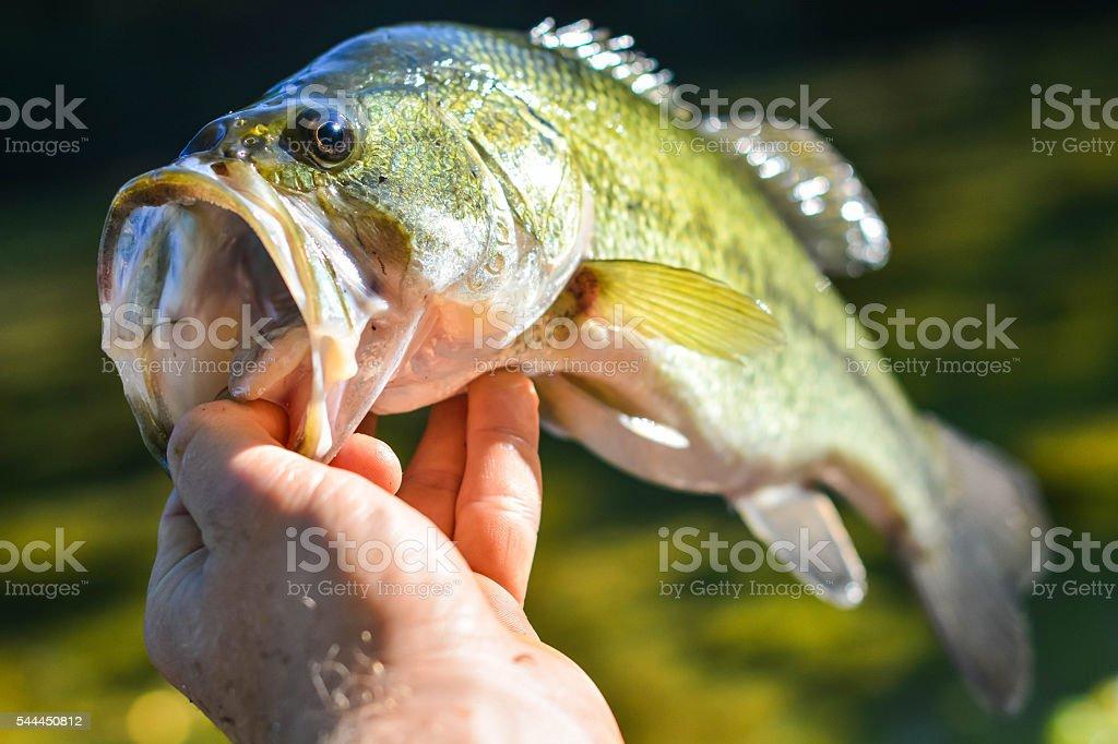 Holding nice catch stock photo