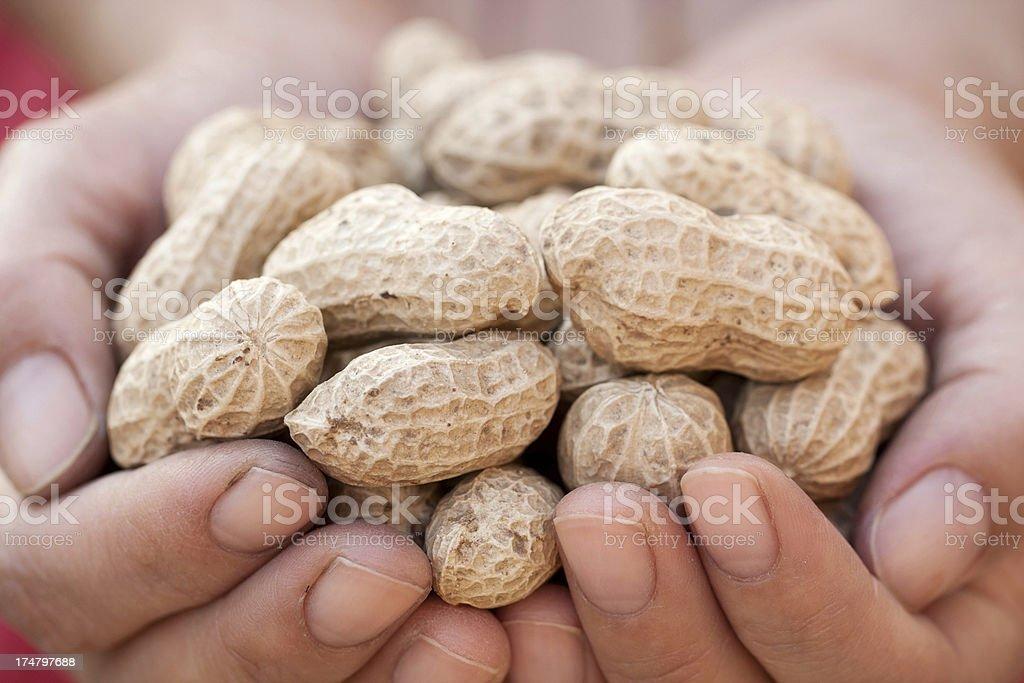 Holding peanuts stock photo