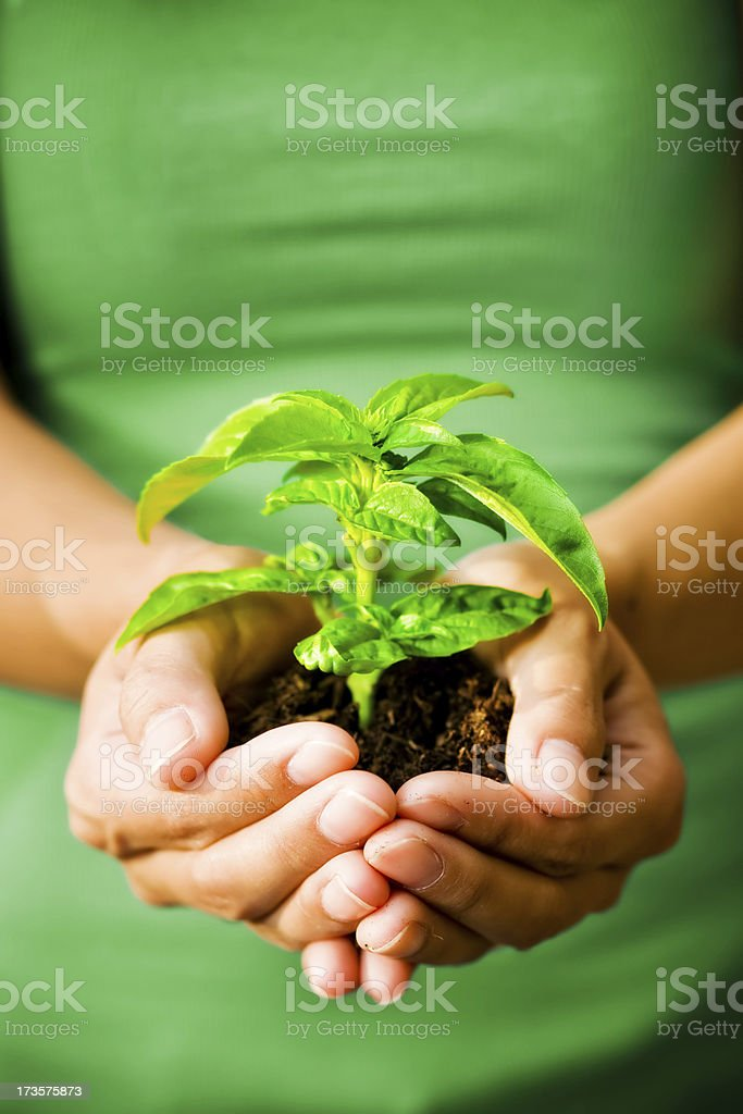 holding plant in hands with green shirt royalty-free stock photo