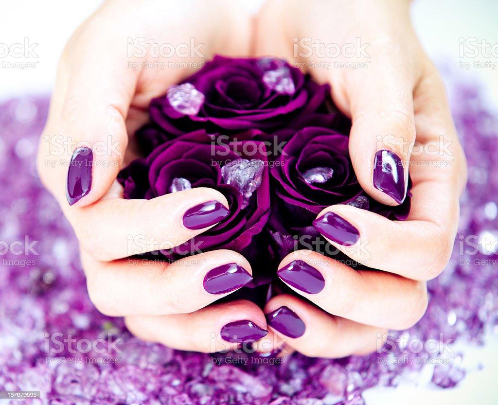 Holding purple roses stock photo