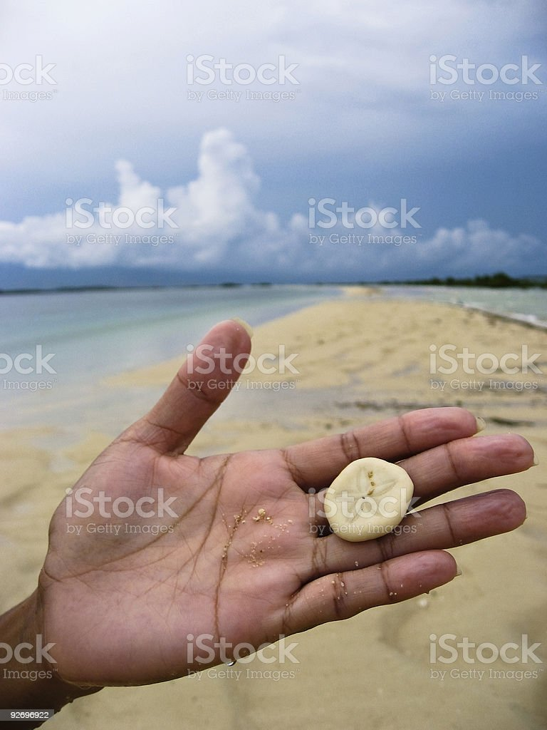 holding sand dollar in hand on beach royalty-free stock photo