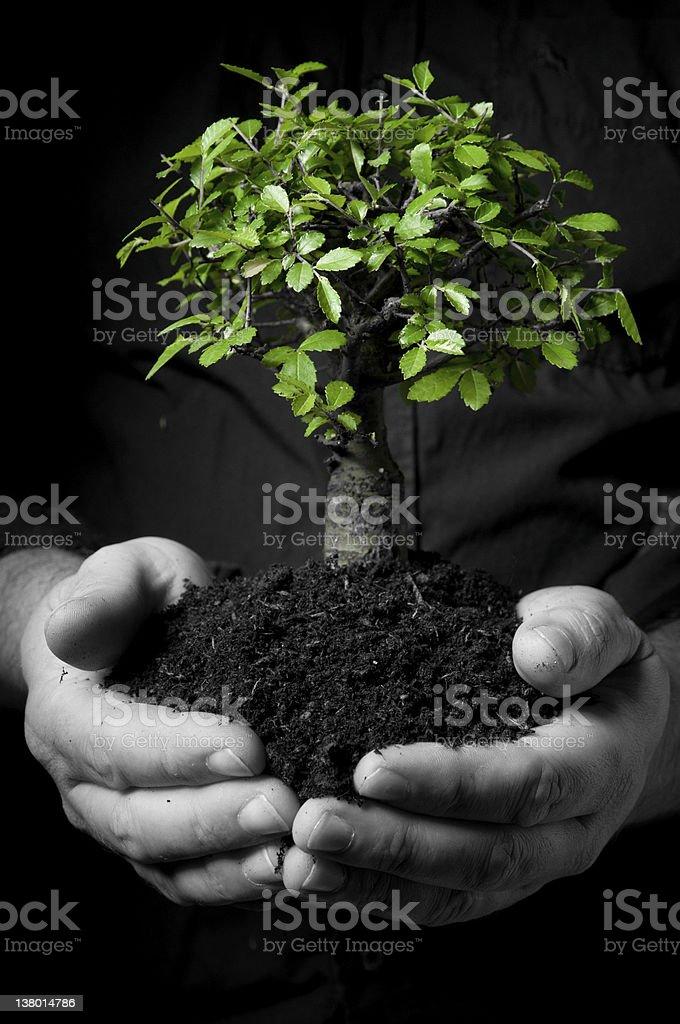 Holding tree stock photo