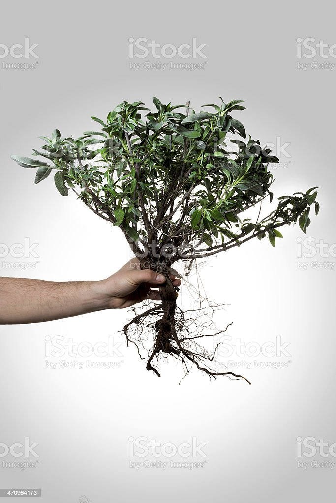 Holding Uprooted Tree stock photo