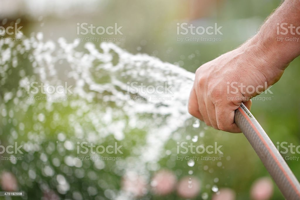 Holding water rubber hose tube. Watering stock photo