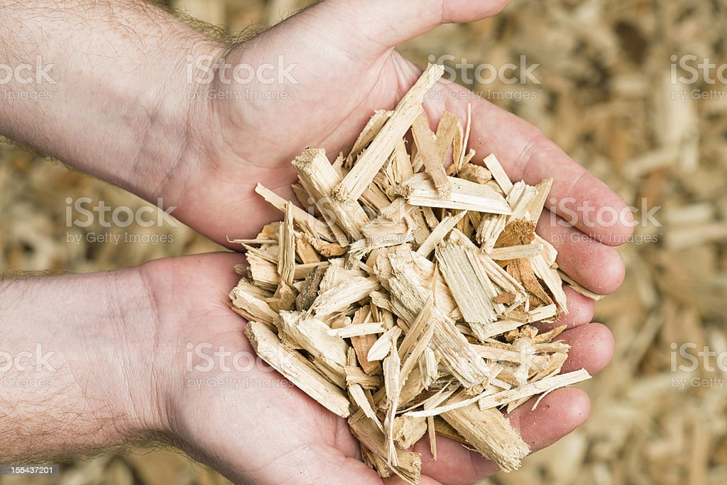 Holding Wood Chips Biomass Fuel stock photo