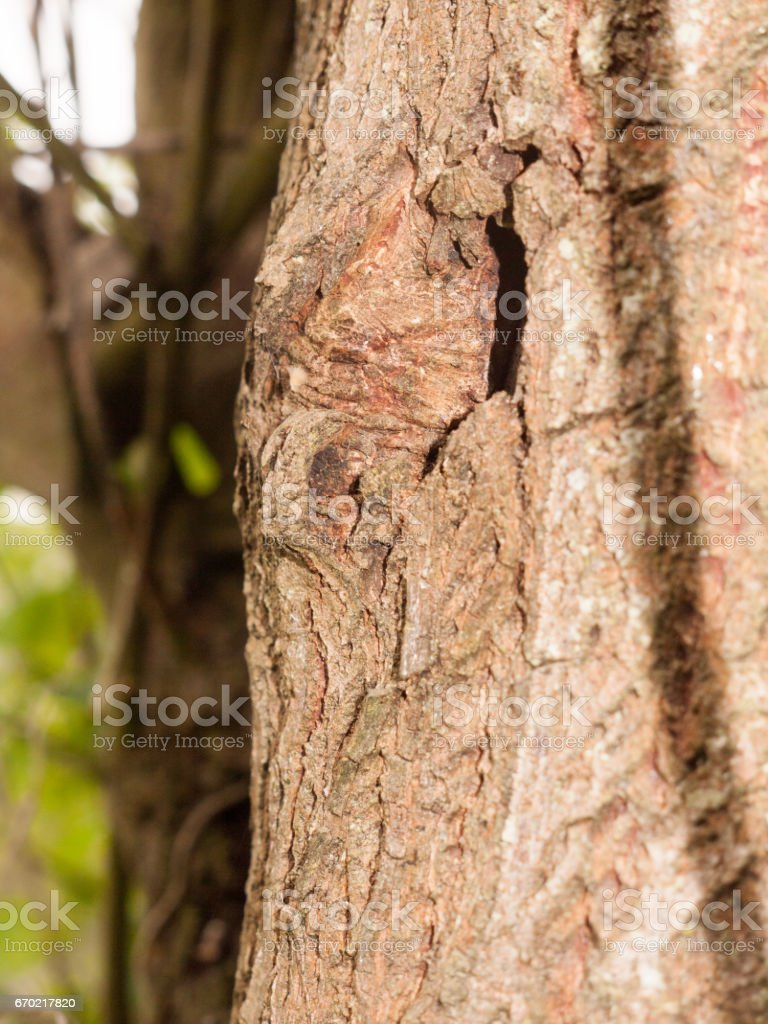 A Hole in the Edge of Tree and Its Bark, Close up stock photo