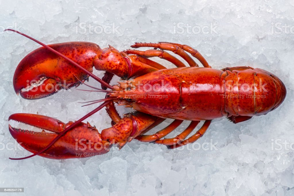 Hole lobster on ice stock photo