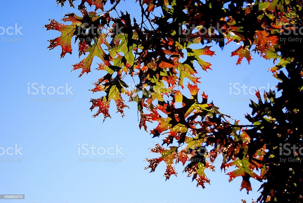 Holes in Colored Leaves royalty-free stock photo