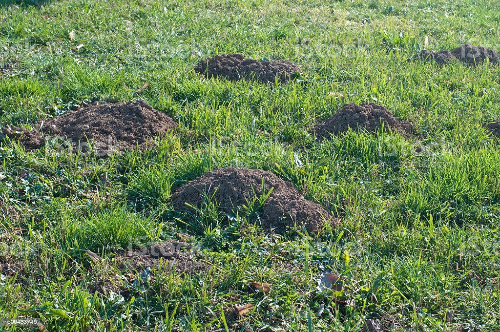 Holes in the ground used by moles stock photo