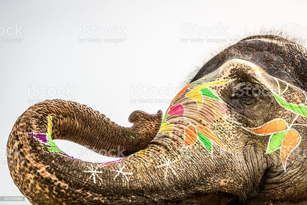 Holi Elephant stock photo