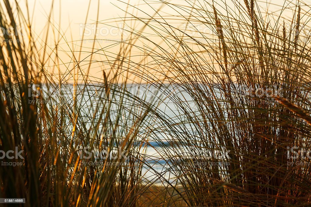 Holiday background: Dune grasses in sunset at beach of Mimizan-Plage stock photo
