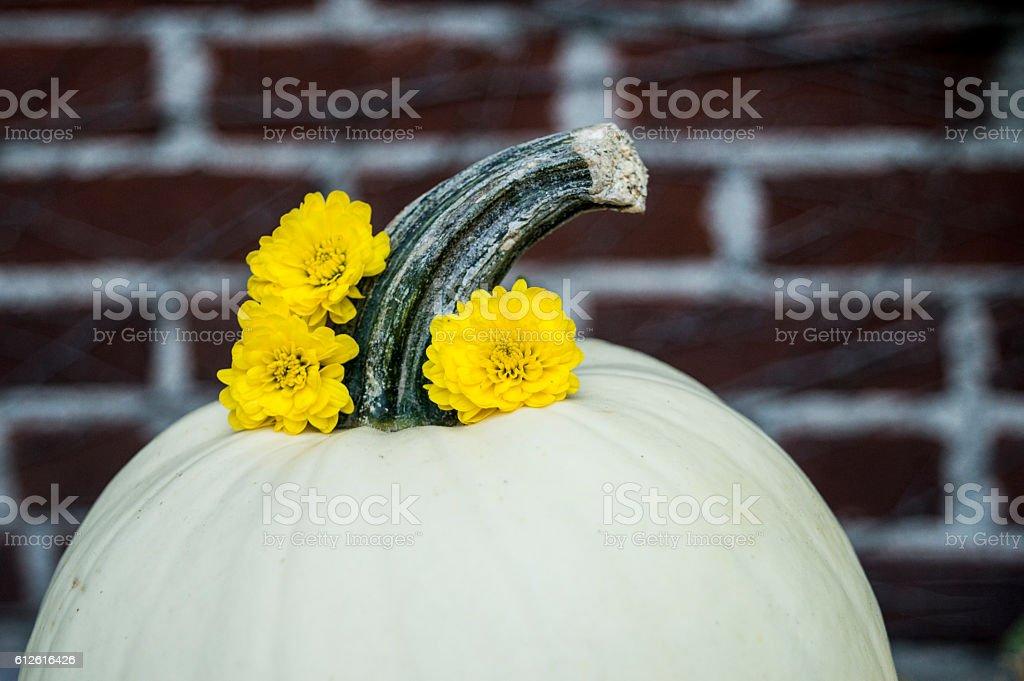 Holiday Centerpiece Closeup White Pumpkin with Yellow Flowers Around Stem stock photo