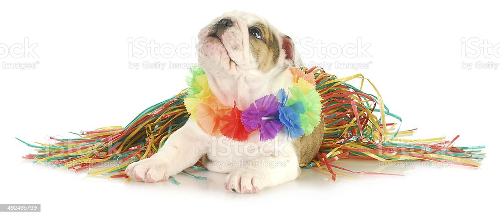 holiday dog stock photo
