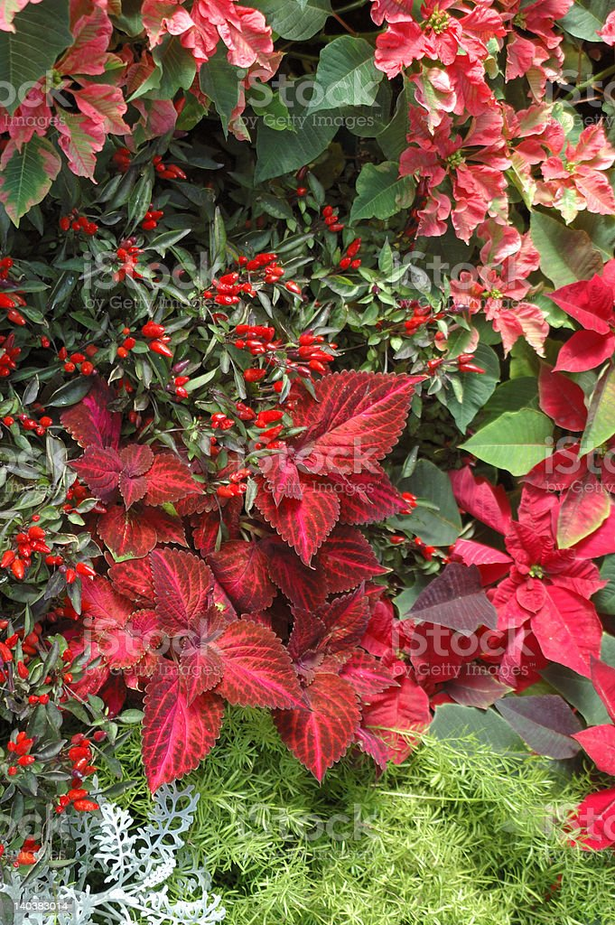 Holiday Flowers royalty-free stock photo