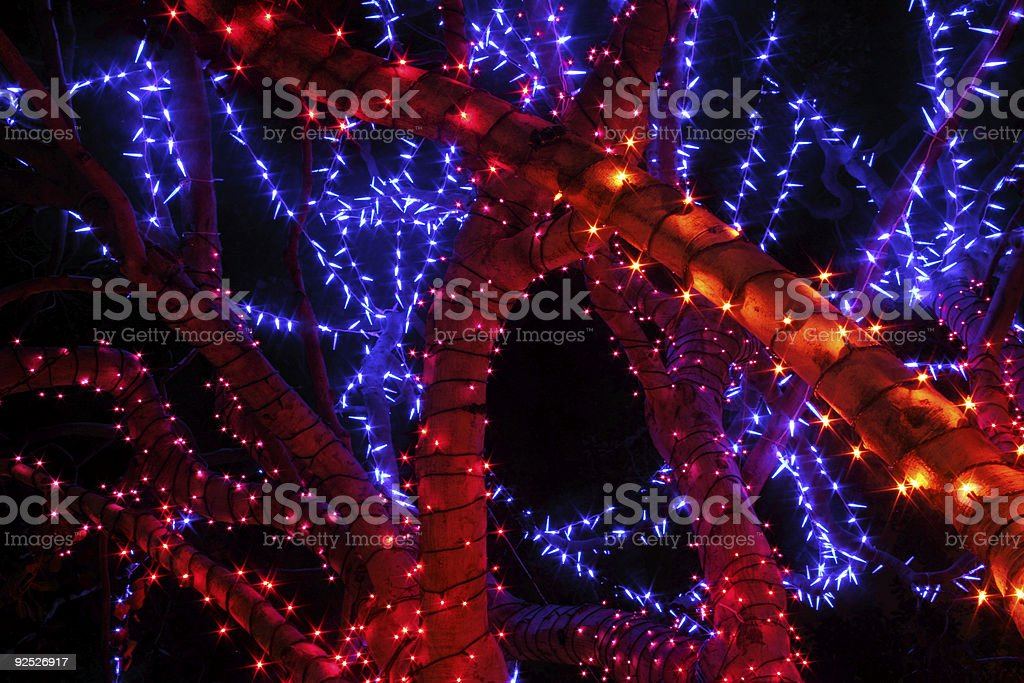 Holiday Lights on a Tree stock photo